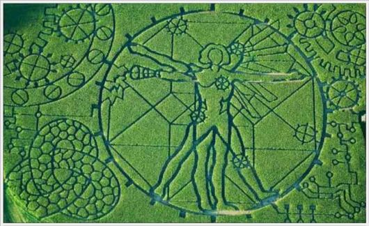 Amazing Corn Crop Maze Art