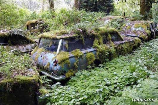 Crazy Car Cemetery In The Forest