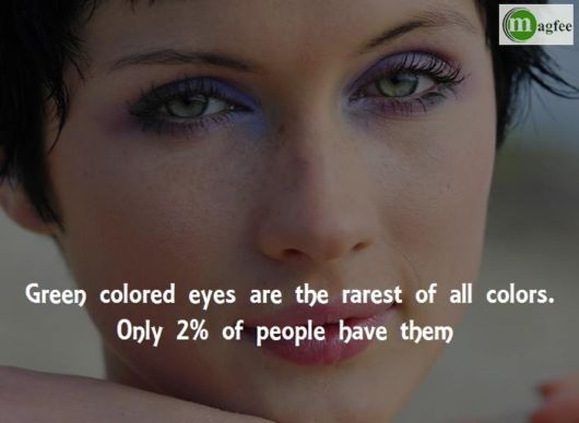 Amazing Eye Facts You Did Not Know Before