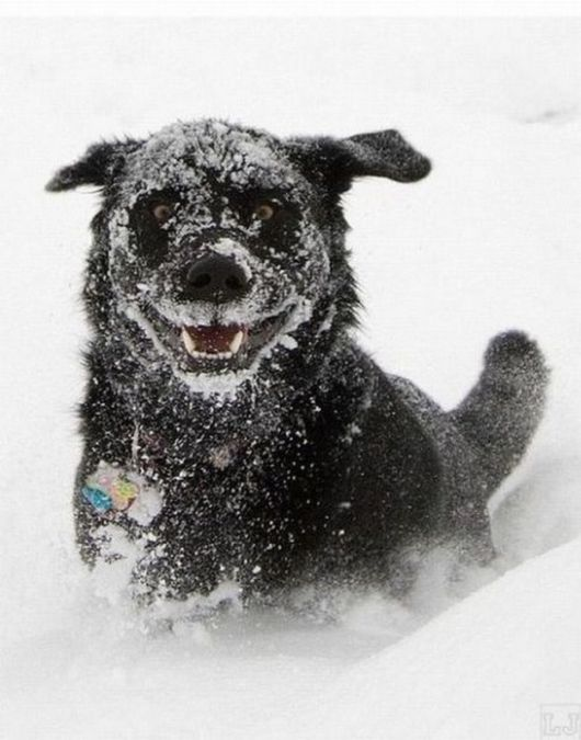 Happy Dogs In The Snow