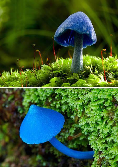 The Most Amazing Mushrooms