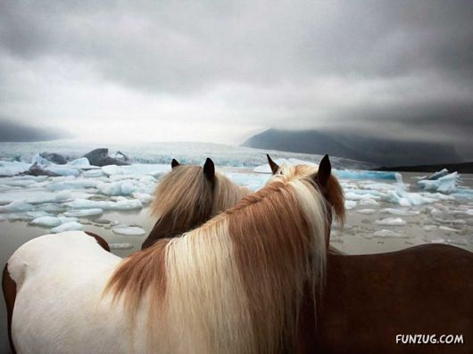 Click to Enlarge - Beautiful Horses Wallpapers