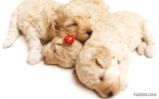 Cute Animals Sleeping