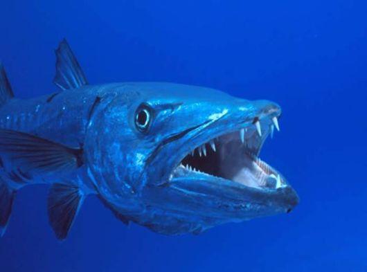 Top 10 Terrifying Killer Fish
